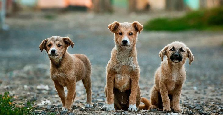 pup opvoeden tot gezonde hond